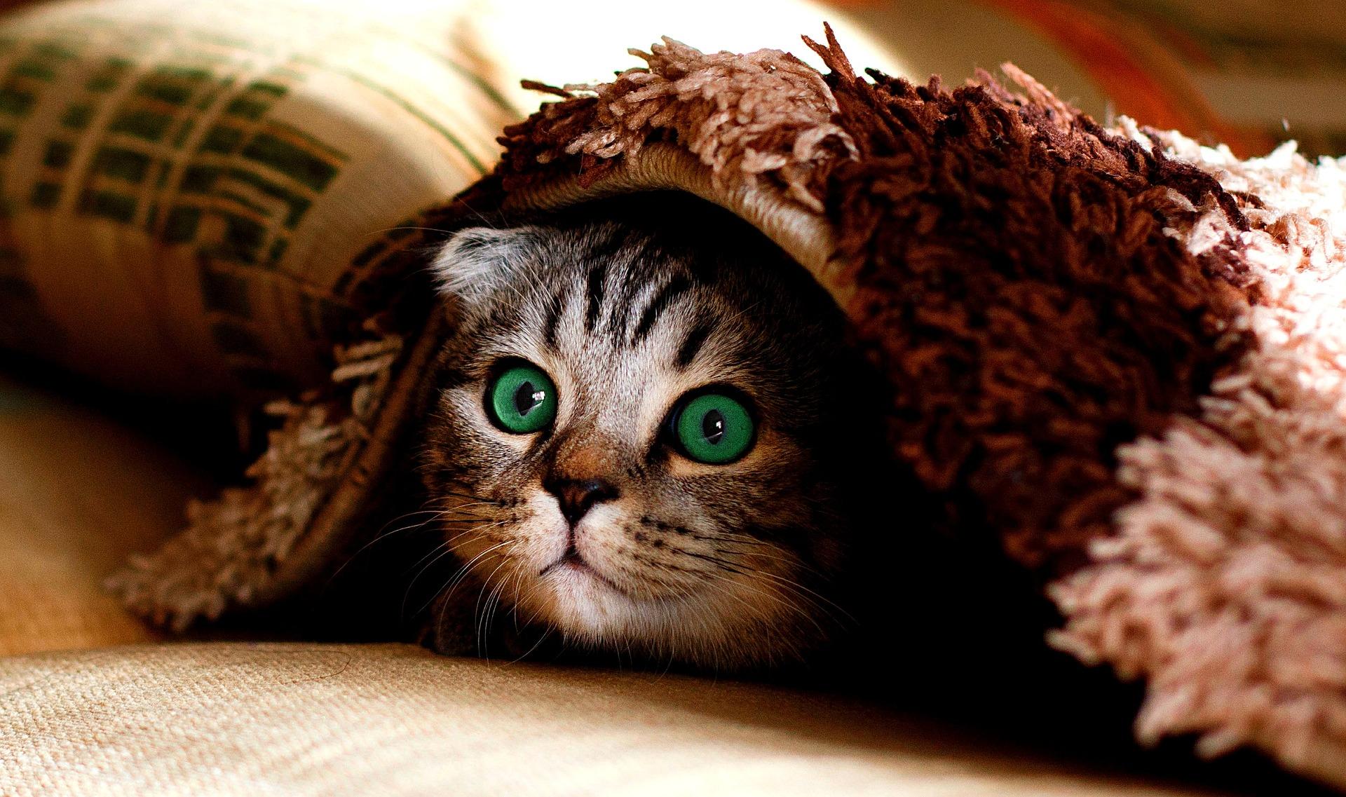 immagine di gatto che si nasconde e non si fa trovare