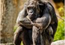 immagine scimmia che riflette