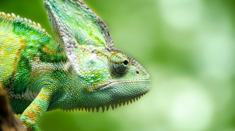 agente-immobiliare-camaleonte